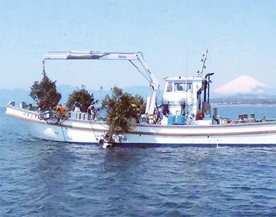 丹沢ヒノキ 漁礁に活用