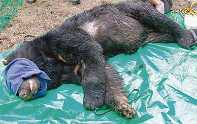 登山シーズン「クマにご注意」