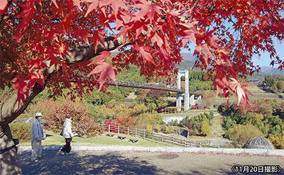 戸川公園で紅葉が見ごろ