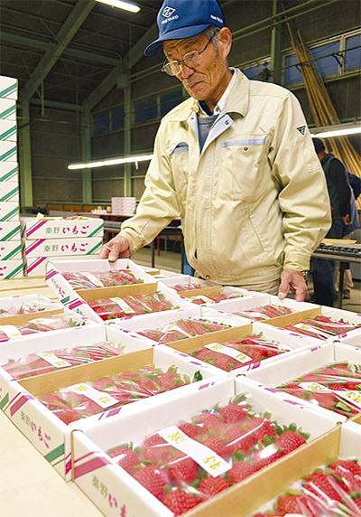 イチゴ出荷始まる