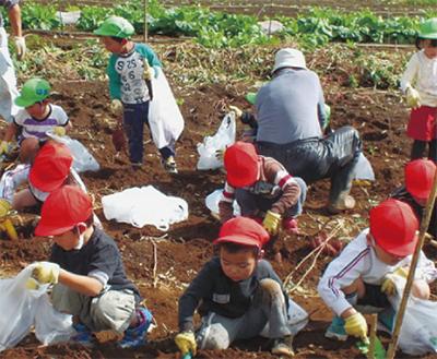 園児らがイモ掘り