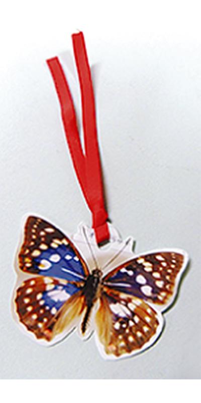 日本の蝶展