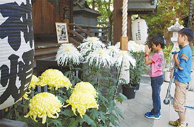 曾屋神社で菊の展示
