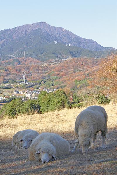 秦野の羊 安泰を願う