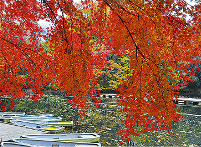 師走の湖畔映える紅葉