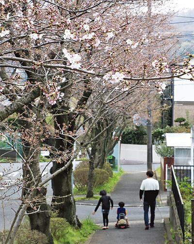 桜の咲くまち