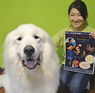 動物愛護に音楽で一助