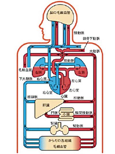 「動脈硬化と血管検査のお話」