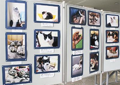 野良ネコを考える写真展