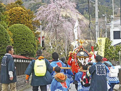 桜と神輿が春告げる
