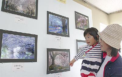個性光る、桜の写真展