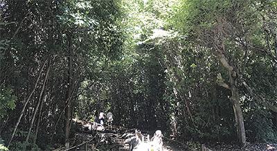 秦野から森づくり訴え