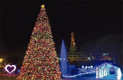 キャンパス彩るクリスマスツリー