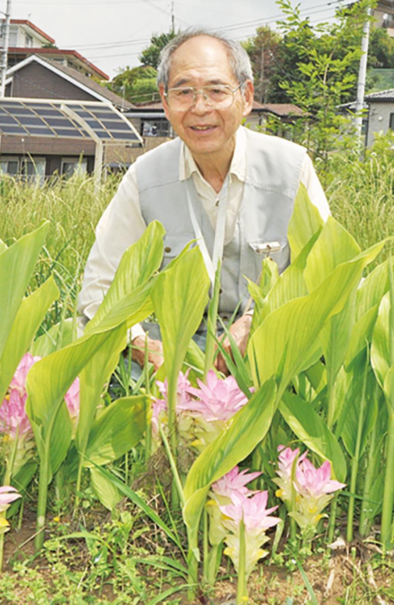 春ウコンと観音竹の花咲いた