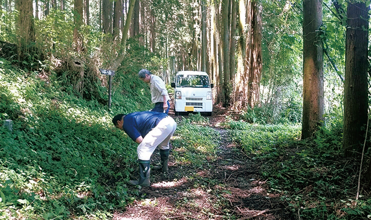 ヤマビル駆除のため環境整備