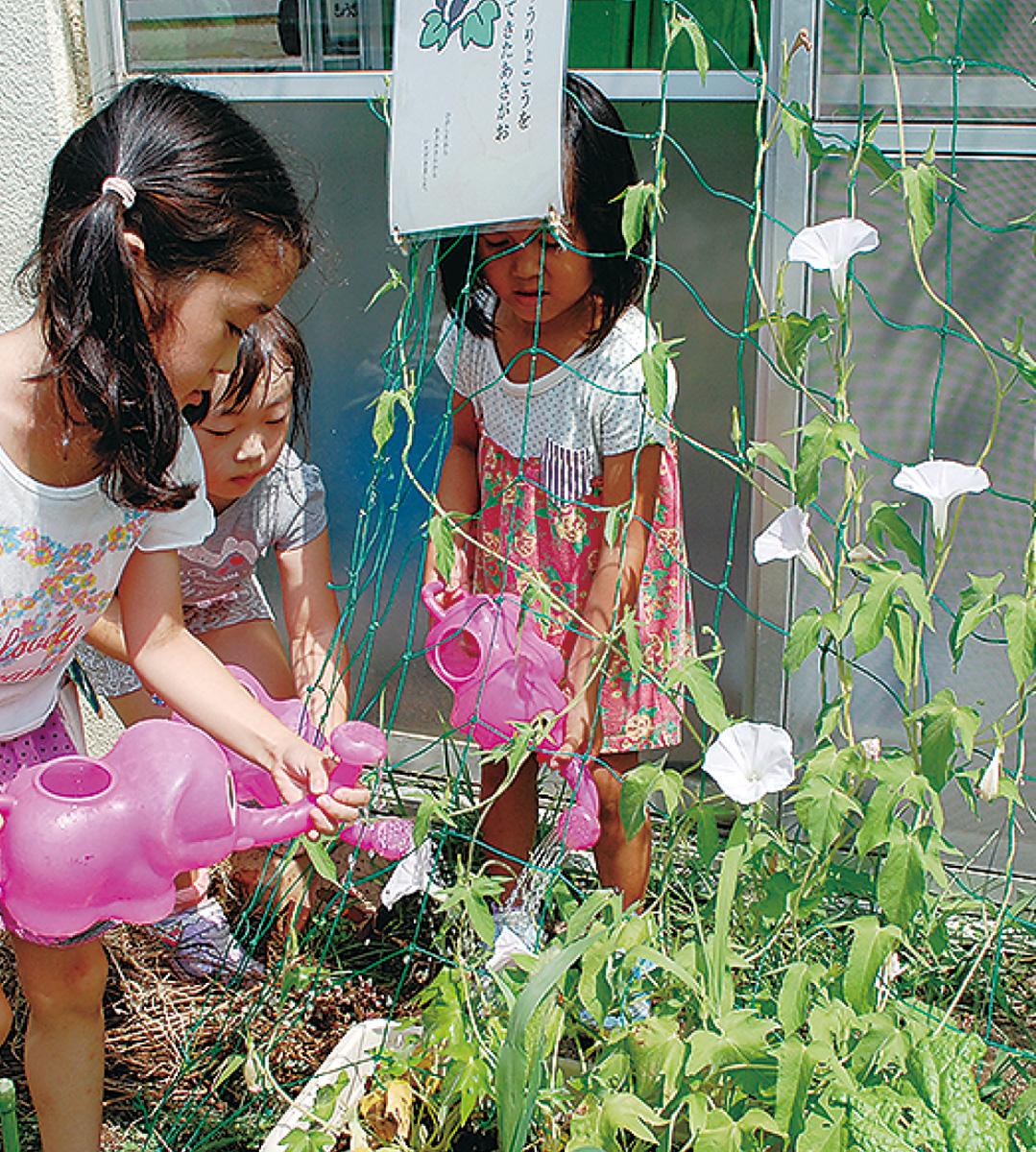 宇宙アサガオが東幼稚園で開花
