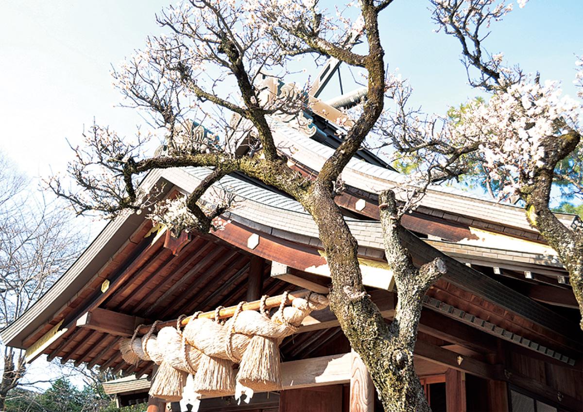 梅の古木が春に誘う