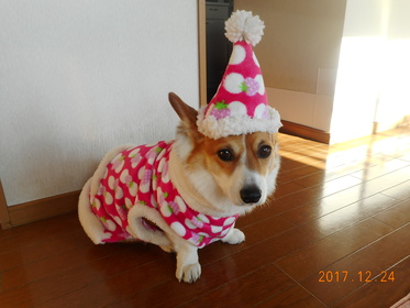 レオ 瀬谷区 5歳 とっても人懐っこいです。手作りのお洋服と帽子で暖か~い!