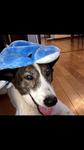 エルフ 小田原市 16歳3ヶ月 おばあちゃん犬ですが、まだまだ元気いっぱいです!